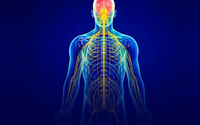 Нервная система пациента - Квинмед