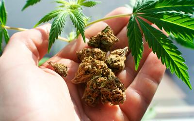 Почему у марихуаны много названий - Квинмед